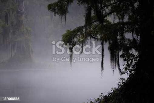 Swamp in early morning mist