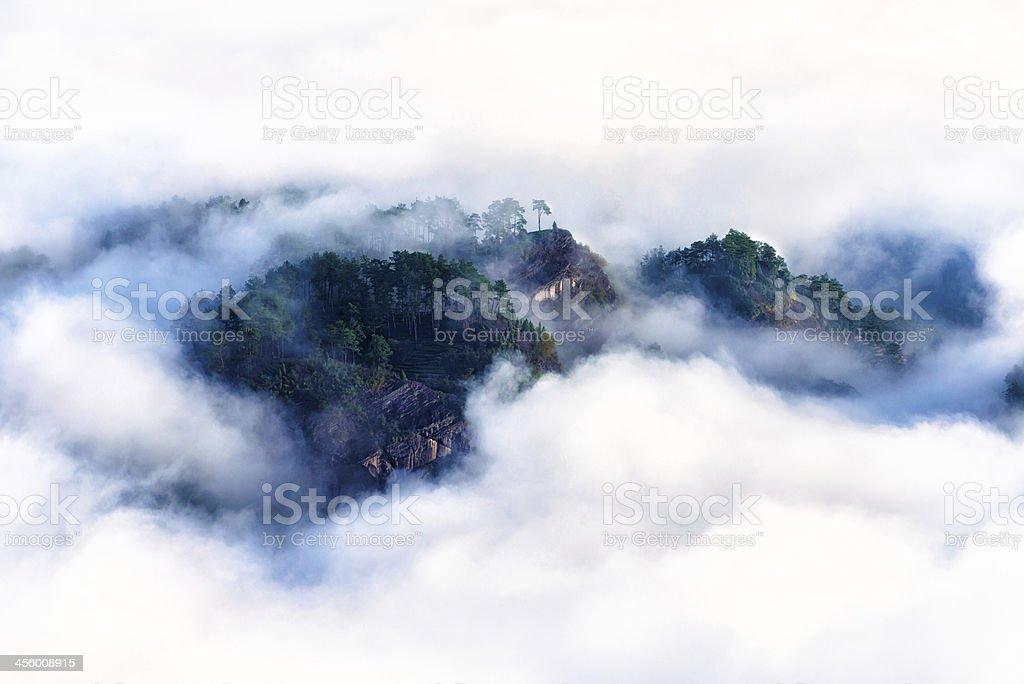 Misty tea plantation on mountain stock photo
