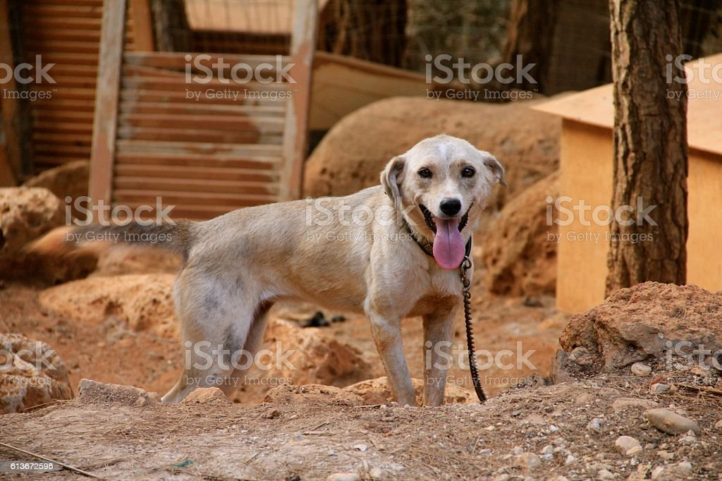 Misty the Wagging Tail Dog stock photo
