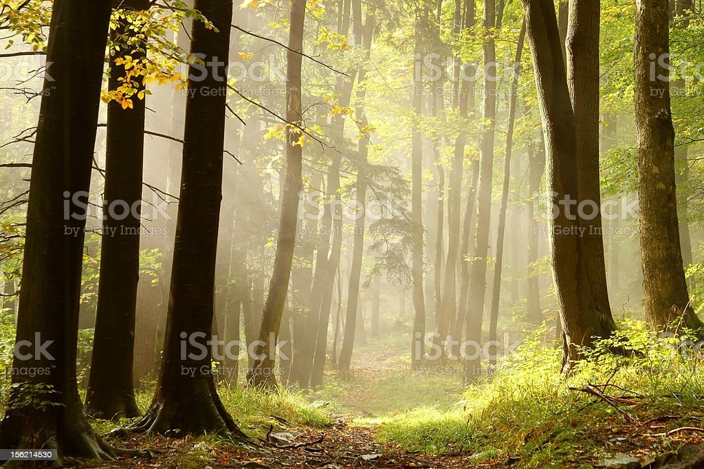 Misty trail in an enchanted forest royalty-free stock photo