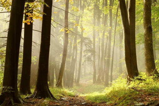 Misty trail in an enchanted forest