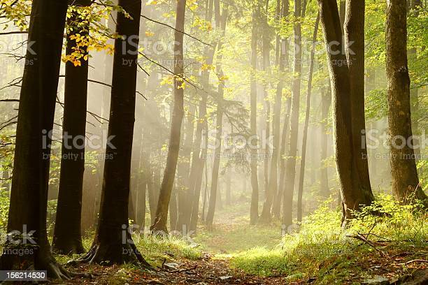 Photo of Misty trail in an enchanted forest