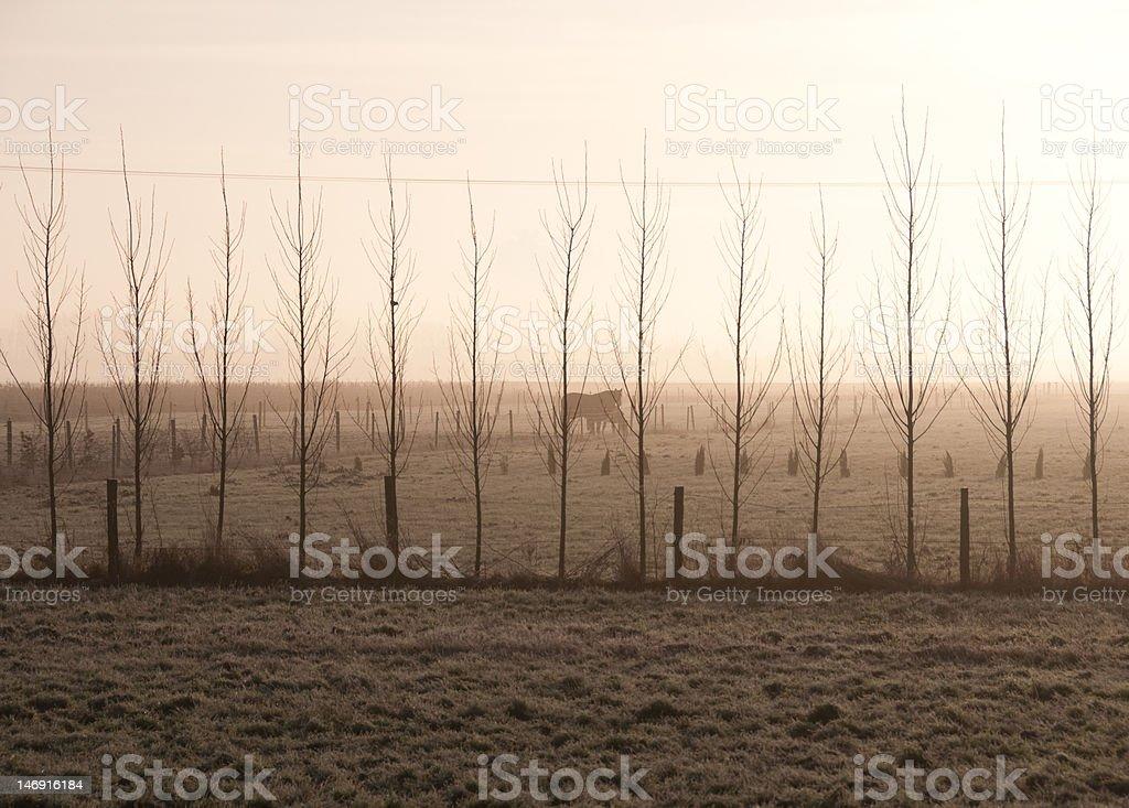 Misty Trees and horses royalty-free stock photo