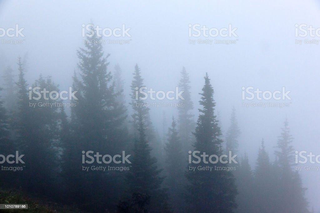 Misty trees stock photo