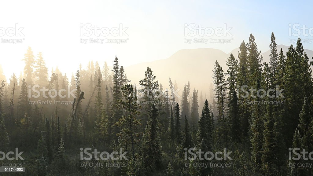 Misty tundra forest stock photo