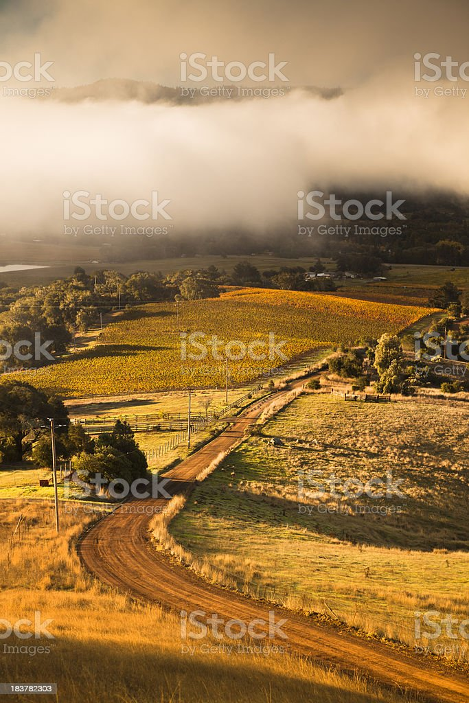Misty vineyard, Napa Valley, California, USA royalty-free stock photo