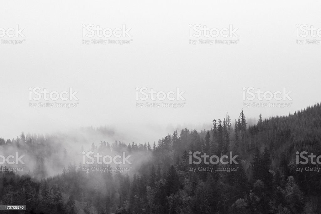 Misty Wilderness stock photo
