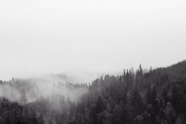 Misty Wilderness stock photo