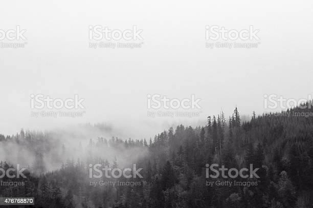 Misty Wilderness Stock Photo - Download Image Now