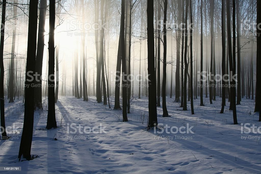 Misty winter forest at dawn royalty-free stock photo