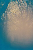 Fog surrounds bare trees on a misty cold morning