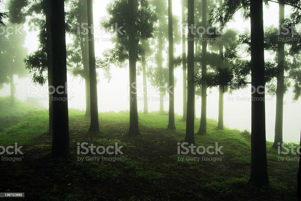 Misty woods royalty-free stock photo