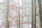 Treeline with Night Moon - Long exposure image showing a moonlit treeline at night in autumn season