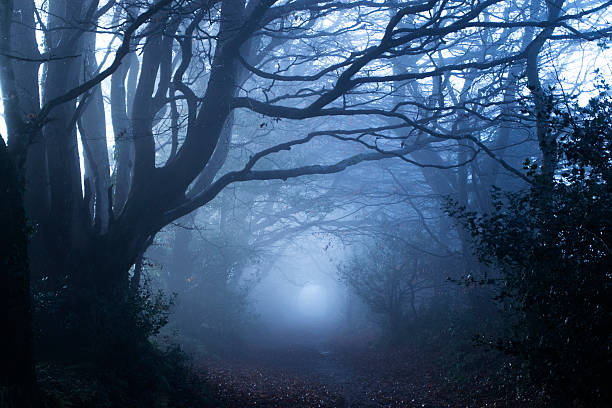 misty woods - trees in mist stock pictures, royalty-free photos & images