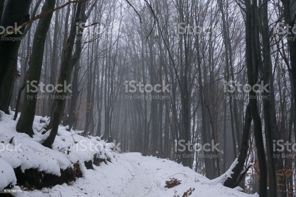 Misty woods under the snow in winter. photo libre de droits
