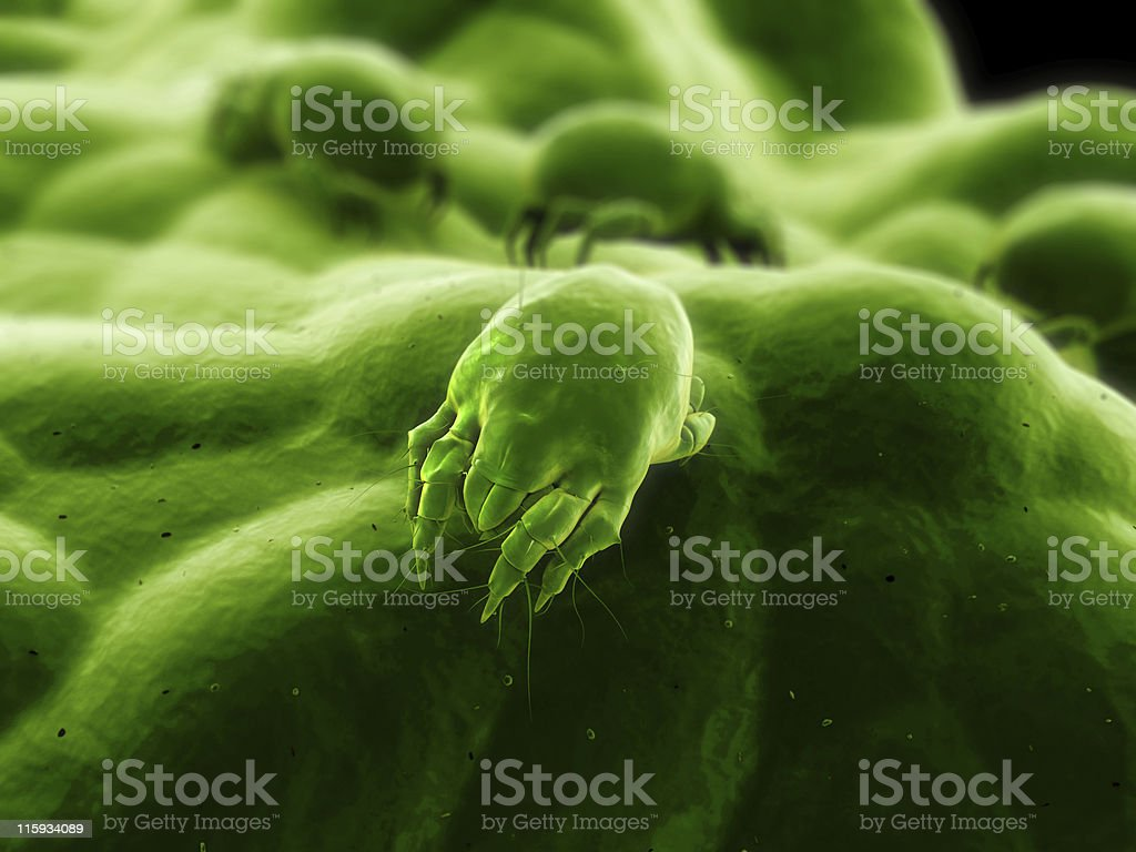 mite royalty-free stock photo