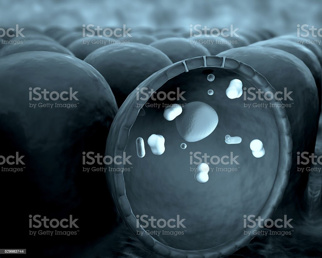 mitochondria stock photo