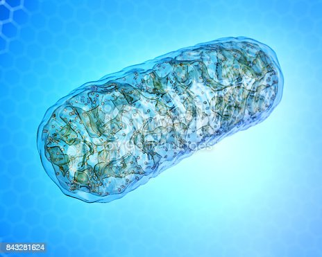 Mitochondria - microbiology, cellular organelle 3d illustration