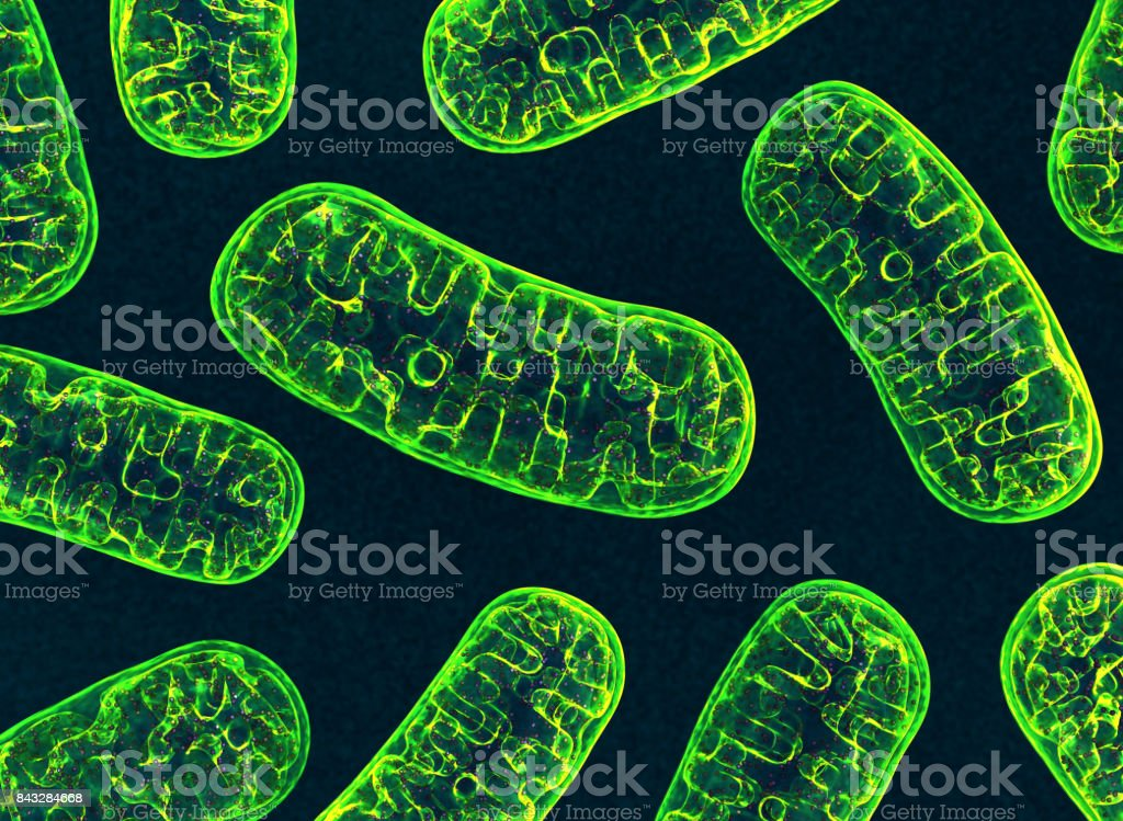 Mitochondria stock photo