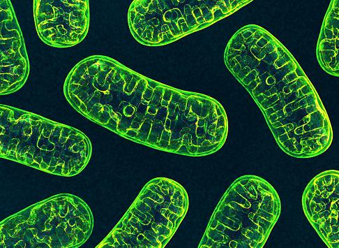 Mitochondria Stock Photo - Download Image Now