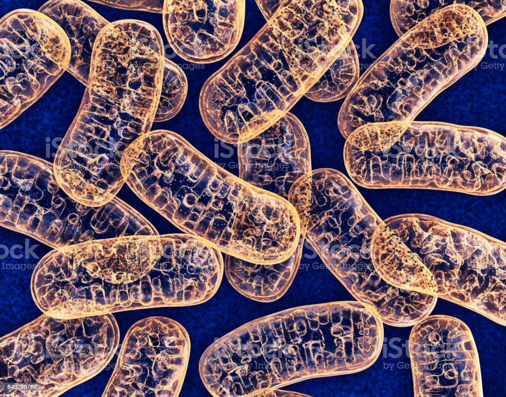Mitochondria royalty-free stock photo