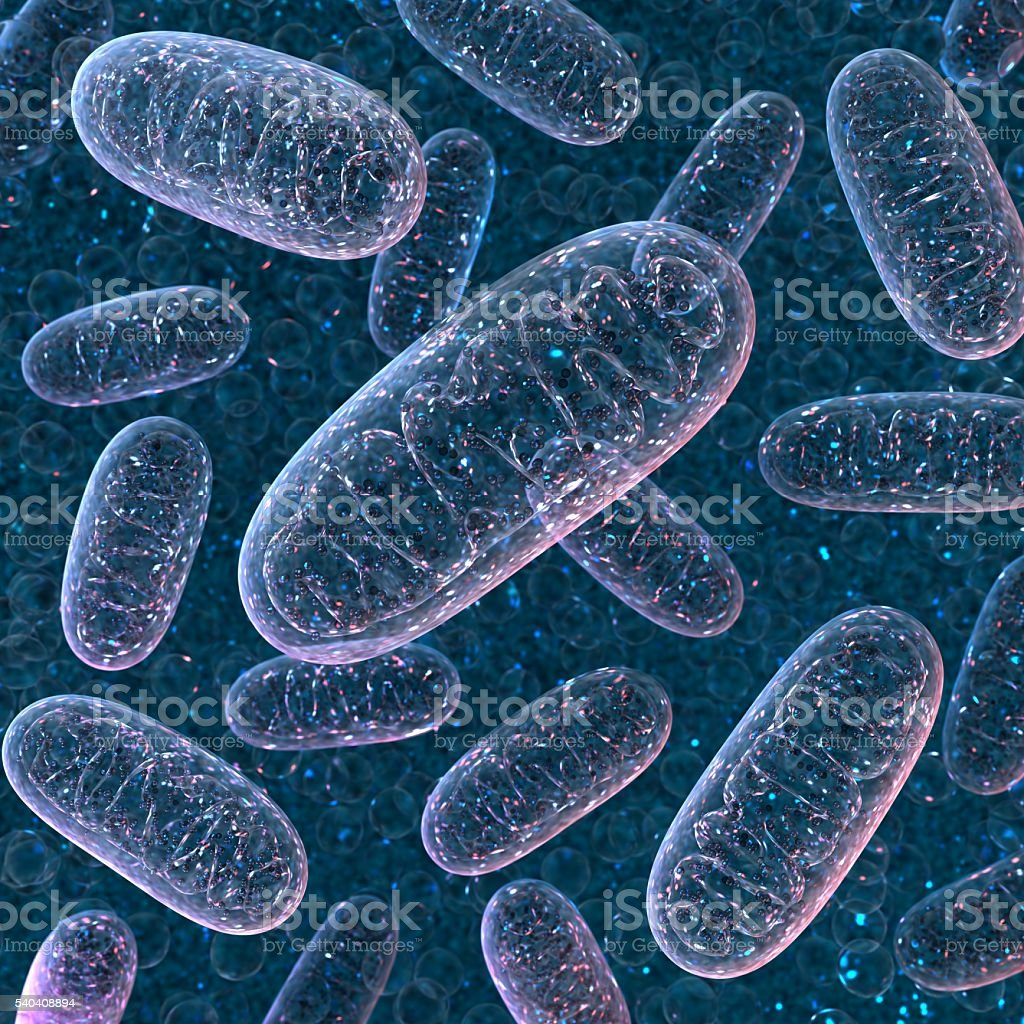 Mitochondrium. 3d rendering. stock photo