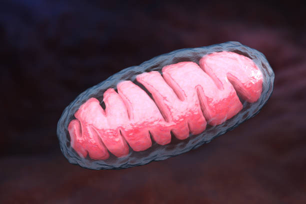 Mitochondrion stock photo