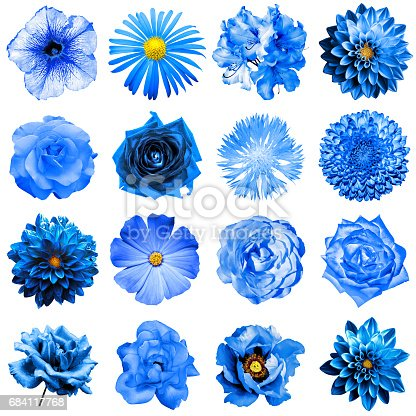 mix collage of natural and surreal blue flowers 16 in 1 peony dahlia