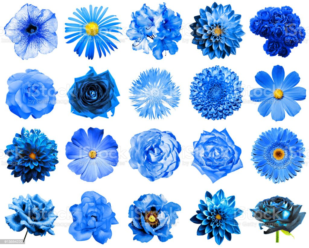 Mix collage of natural and surreal blue flowers 20 in 1: peony, dahlia, primula, aster, daisy, rose, gerbera, clove, chrysanthemum, cornflower, flax, pelargonium isolated on white stock photo