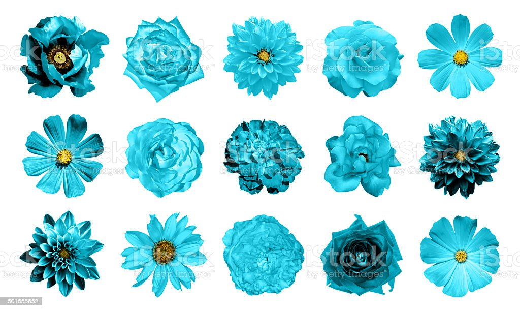 Mix collage of natural and surreal turquoise flowers 15 stock photo