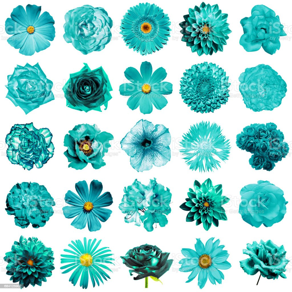 Mix Collage Of Natural And Surreal Turquoise Flowers 25 In 1 Peony