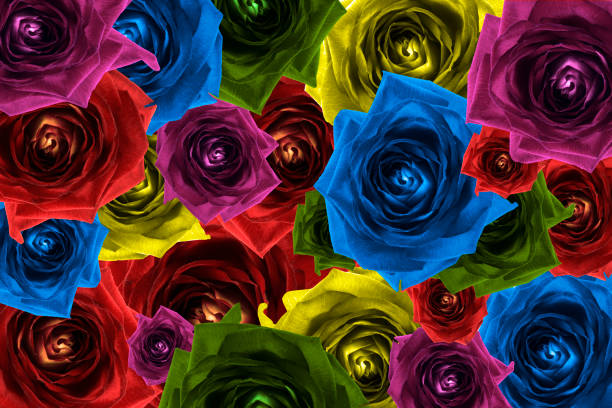 Mix collage of rose flowers rainbow background red violet rose orange picture id870596004?b=1&k=6&m=870596004&s=612x612&w=0&h=kvuww3sx 6nkfcznqb4gqqttswyqkup3sxg8z pojws=