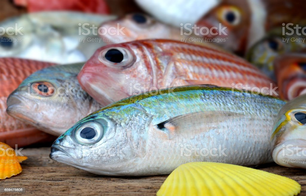 mix colorful fresh fishes stock photo