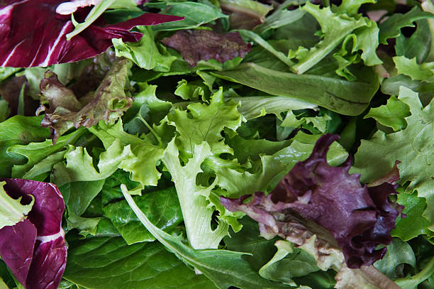 Mix Lettuce Mix Lettuce - spring mix butterhead lettuce stock pictures, royalty-free photos & images