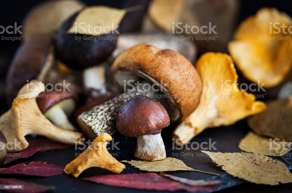 Mix of autumn wild forest edible mushrooms stock photo