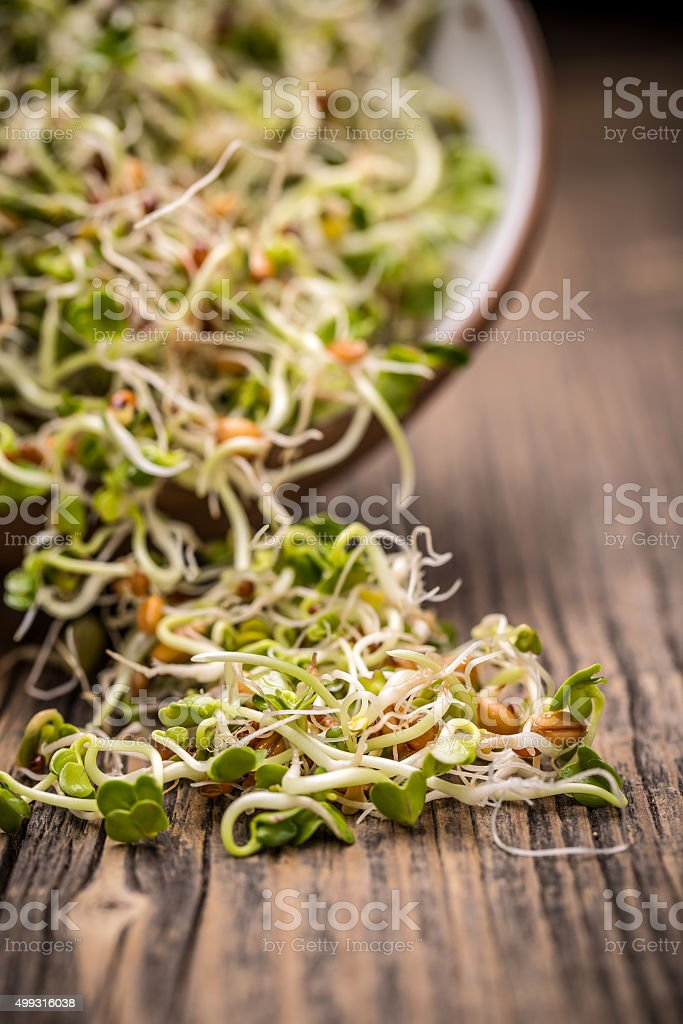 Mix of different sprouts stock photo