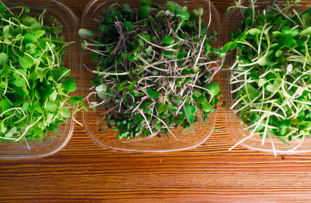 mix of green sprouts mix of green grass sprouts, arugula, red cabbage, radish microgreen stock pictures, royalty-free photos & images