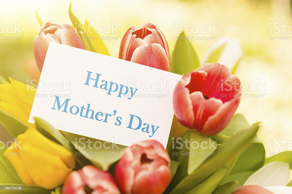 mix of tulips for mother's day royalty-free stock photo