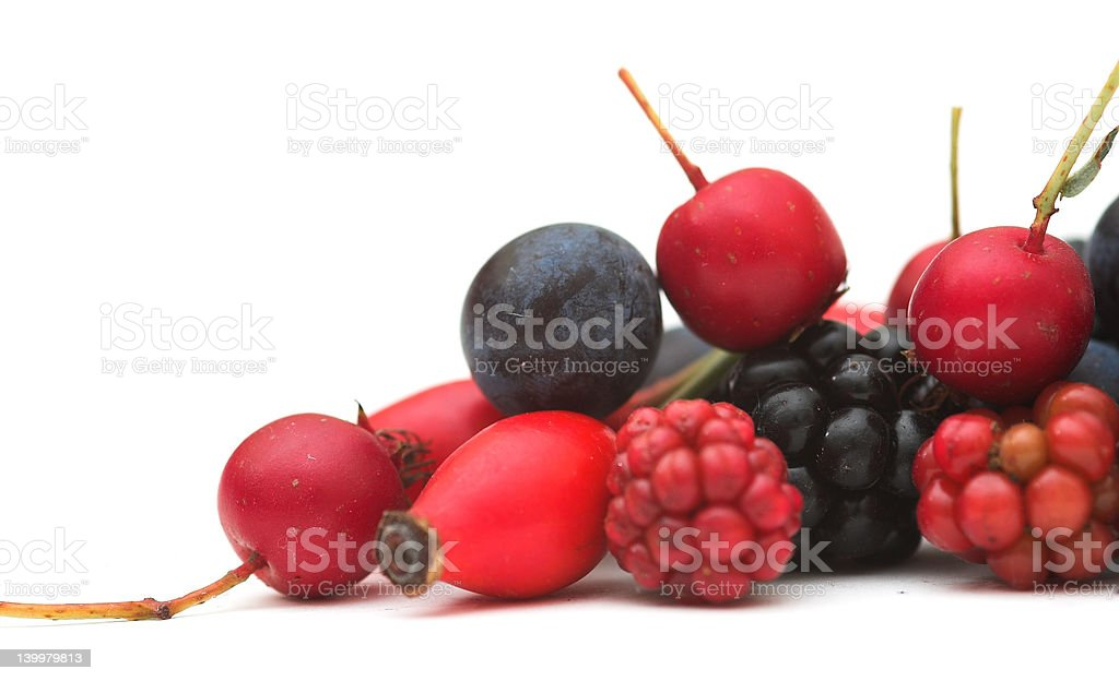 Mixed Autumn Berries royalty-free stock photo