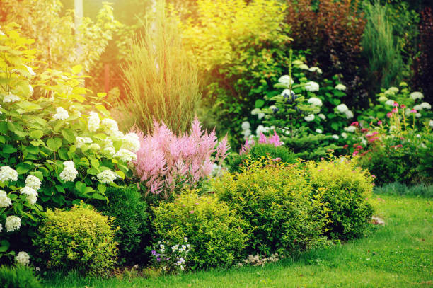 mixed border in summer garden with yellow spirea japonica, pink astilbe, hydrangea. Planting together shrubs and flowers stock photo