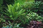 istock mixed border with shady tolerance plants - ferns, hostas and heucheras in summer garden 1305048827