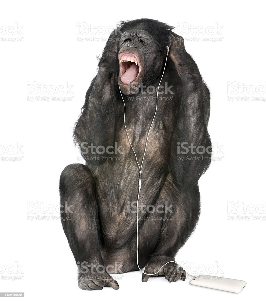 Mixed breed between Chimpanzee and Bonobo listening to music stock photo