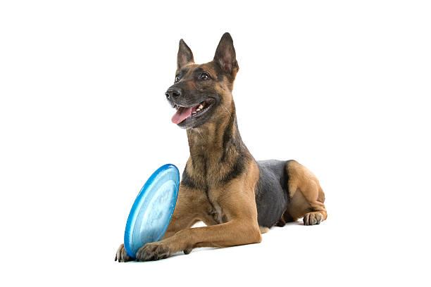 Mixed breed dog picture id97686579?b=1&k=6&m=97686579&s=612x612&w=0&h=ojain qc ksivi5ggswyauujmzxbignnfn6zmgoyeqe=