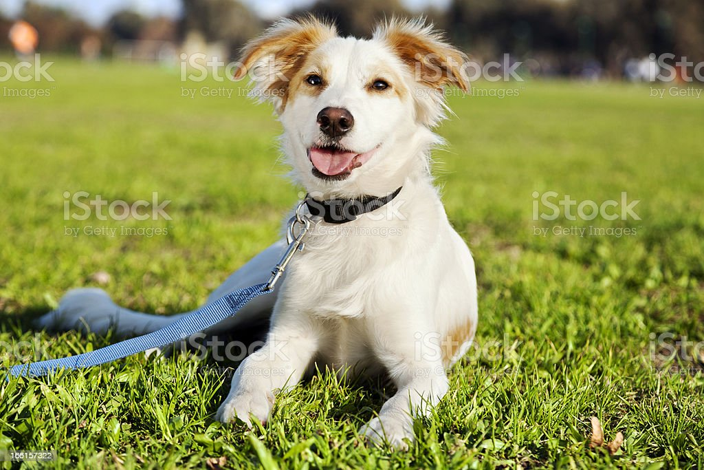 Mixed Breed Dog Portrait in the Park stock photo
