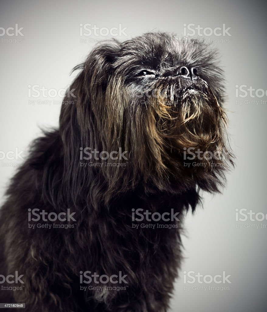 Mixed breed dog portrait royalty-free stock photo