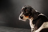 cute mixed breed puppy portrait indoors in natural light
