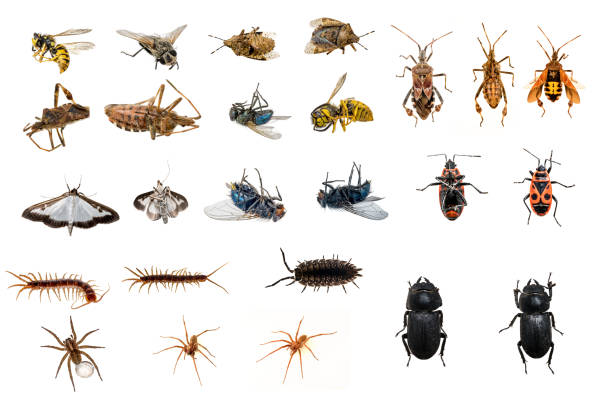 mixed collection of dead and living insects - insect stock pictures, royalty-free photos & images