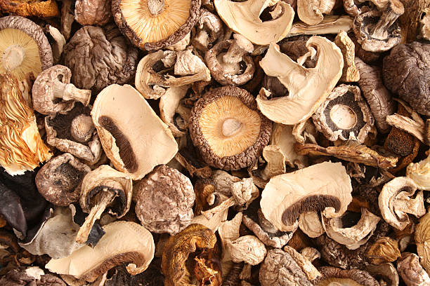 Mixed dried mushrooms Top view of mixed dried mushrooms dried plant stock pictures, royalty-free photos & images