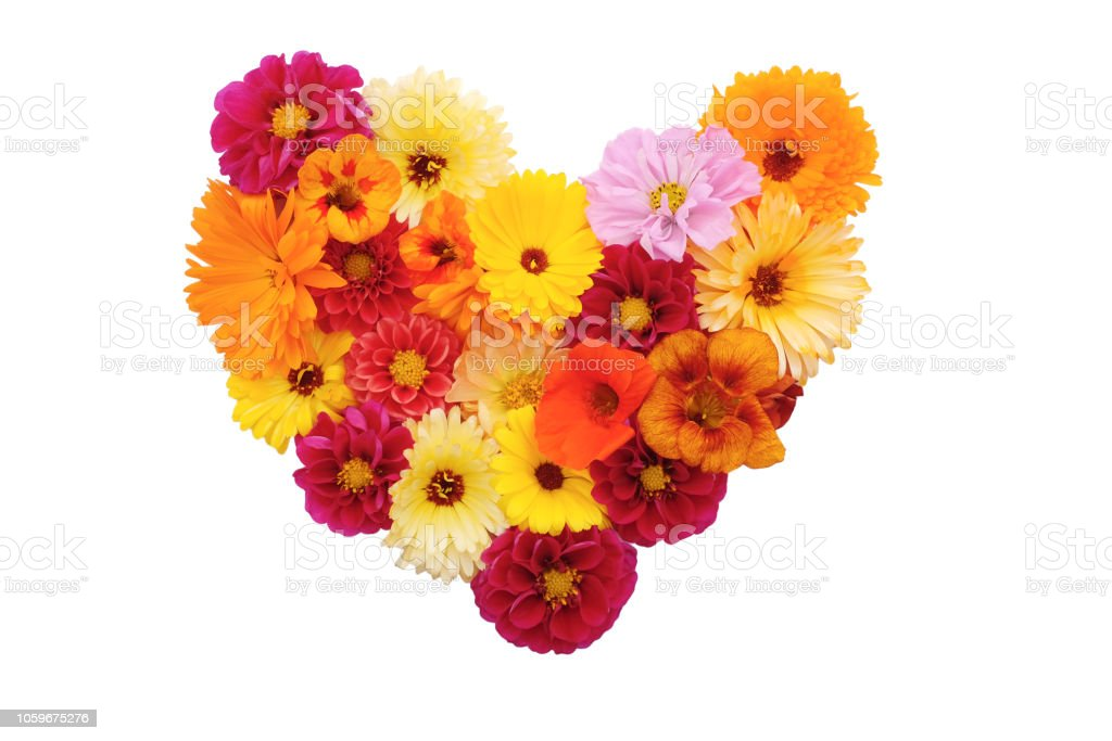 Mixed flowers in a heart shape on white royalty-free stock photo