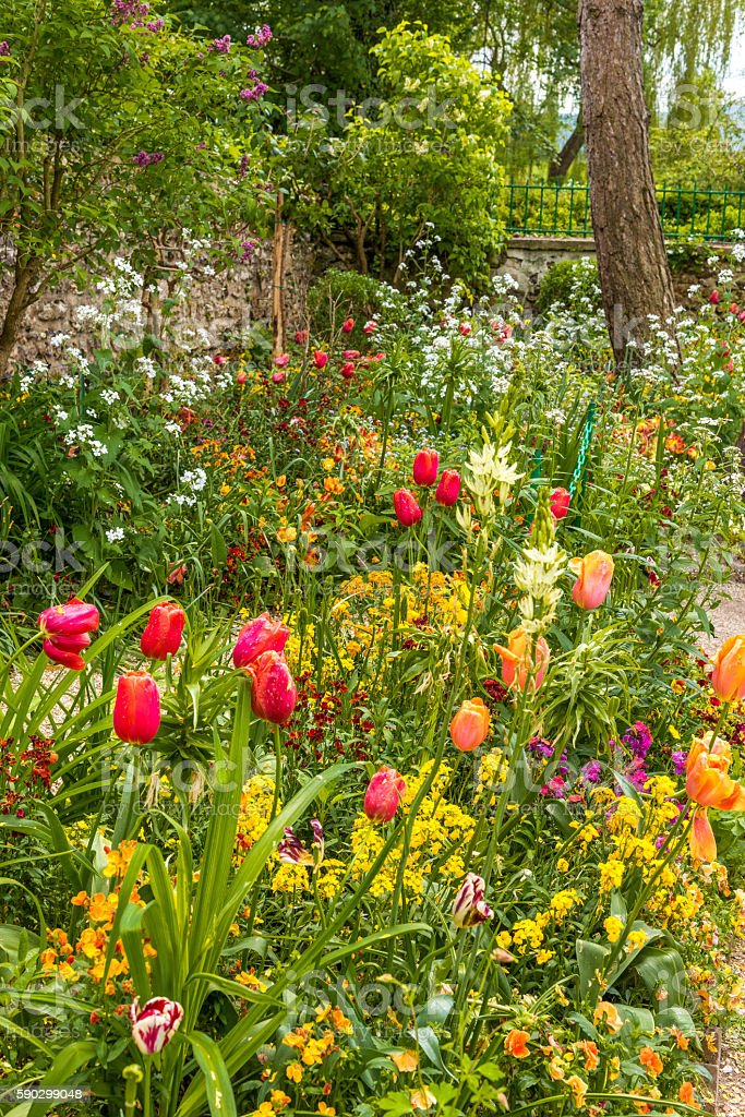 Mixed flowers in the garden Стоковые фото Стоковая фотография